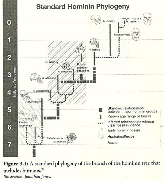 Standard Hominin chart Wells0001