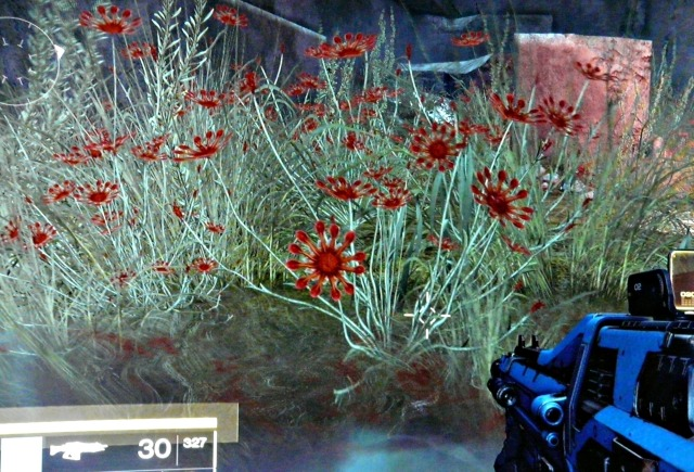 More flowers in the Black Garden