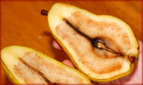 bad trees don't produce good fruit